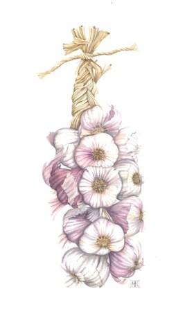 String of Rose Garlic £300