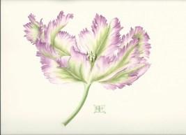 Tulip - Spring Green £180